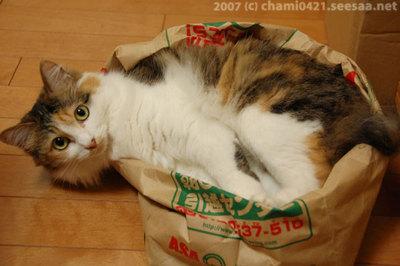 20070703新聞袋ベッド