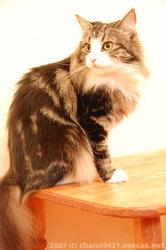 20070802モデル猫スー嬢