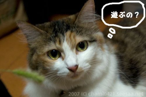 20070823エノコロ草deガッツポーズ♪